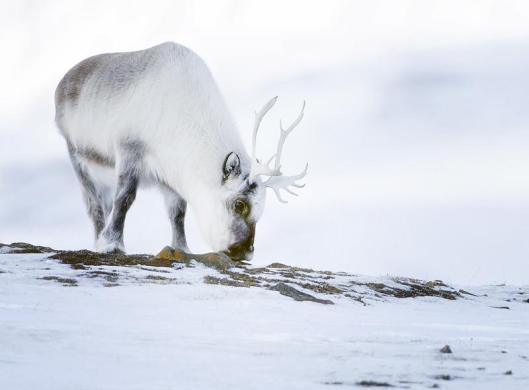 snow-animals-35